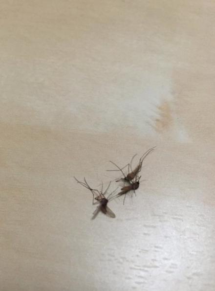 El PP solicita al Tripartito la limpieza de los lodos del depósito de tormentas situado bajo el parquin de Churruca para erradicar las plagas demosquitos